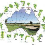 Nullarbor Links Il più grande 18 buce del mondo